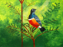 Original painting of a beautiful Superb Starling Royalty Free Stock Photography