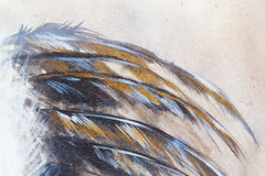 Original painting, black feathers with gold and silver glitter effect. Royalty Free Stock Images