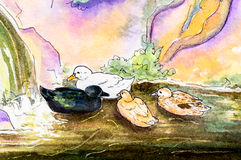 Original painting of ducks on water. Original watercolor painting of four ducks swimming on water near a waterfall Stock Images