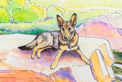 Original painting of a GSD lying down outside. Stock Photo
