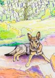 Original painting of a GSD lying down outside. Stock Image