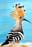 Original painting of Hoopoe bird. Acrylic painting of hoopoe sitting on limestone rock of Bahrain Royalty Free Stock Photos