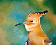 Original painting of hoopoe, a child art. Acrylic painting of a portrait of Hoopoe Royalty Free Stock Photo