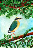 Original painting of Indian Pitta, Ranthambore National Park Royalty Free Stock Photos