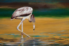 Original painting of juvenile greater flamingo, a child art Stock Image