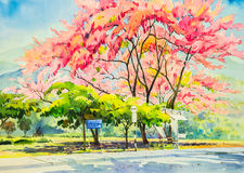 Original painting  landscape colorful of wild himalayan cherry flower tree Stock Photos