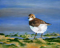 Original painting of a lesser sand plover, a child art Stock Photography