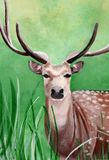 Original painting of a male cheetal deer in the grassland of Dhikala, Jim Corbett Stock Photography