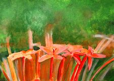 Original painting of red Ixora Royalty Free Stock Images