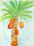Original painting of reddish brown ripen dates Stock Photos