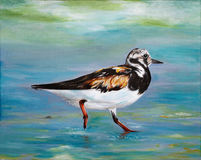 Original painting of a ruddy turnstone, a child art Stock Image
