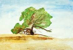 Original painting of tree of life in Bahrain Royalty Free Stock Photography