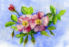 Original Painting of Wild Pink Roses. Stock Photo