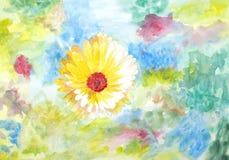 Original painting of yellowish white Calendula Stock Photography