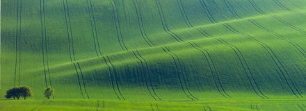 Original panoramic of green fields in beautiful striped hills Royalty Free Stock Images