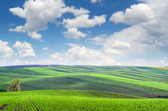 Original panoramic view of fields in beautiful rolling and strip Stock Images