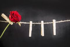 Red rose hanging on a wooden clothespin. Original red rose hanging on a wooden clothespin on a rope on a black background Royalty Free Stock Photo