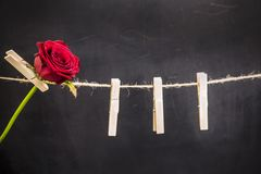 Red rose hanging on a wooden clothespin. Original red rose hanging on a wooden clothespin on a rope on a black background Stock Photos