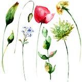 Original set watercolor spring flowers Stock Image