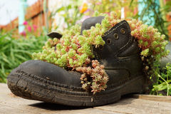 Original street planters, boots with the plant Royalty Free Stock Photo