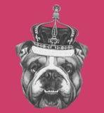 Original- teckning av den engelska bulldoggen med kronan vektor illustrationer