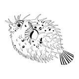 Original- teckning av inbindningsett piggsvinfisken Royaltyfria Bilder