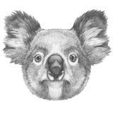 Original- teckning av koalan royaltyfri illustrationer