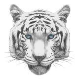 Original- teckning av tigern vektor illustrationer