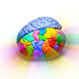 Original Thought Brain Creativity. A human brain that is half multi-colored on a white background Royalty Free Stock Photo
