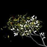 Original tree on black Stock Images