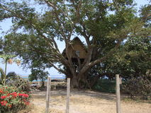Original tree house in Vanuatu Stock Image