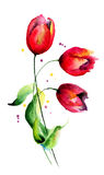 Original Tulips flowers Stock Images
