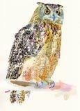Original- vattenfärgmålning av fågeln, uggla på a Fotografering för Bildbyråer