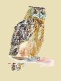 Original- vattenfärgmålning av fågeln, uggla på a Arkivbild