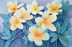 Original Watercolor - Flowers. Original watercolor I painted of yellow tropical frangipani flowers (could be used as background with low opacity royalty free illustration