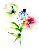 Original watercolor illustration Stock Image