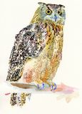 Original watercolor painting of bird, owl on a. Branch (Bubo Virginianus Subarcticus). I am author of this illustration Stock Image