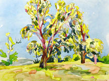 Original watercolor painting of summer tree Stock Images