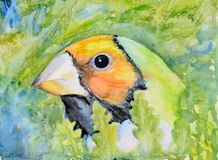 Original watercolour painting of a Gouldian finch. Original watercolour portrait painting of an orange head Gouldian finch Royalty Free Stock Photos