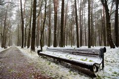 Original wooden bench in the city park at the beginning of winter. Original wooden bench along the road in the city park in the winter cloudy morning Stock Photos
