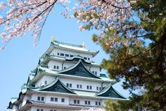 Sakura Nagoya Castle Stock Photo