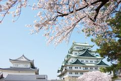 Sakura Nagoya Castle royalty free stock image