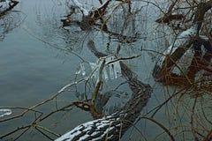 Originalmente acqua sorgiva del fiume della natura Immagini Stock