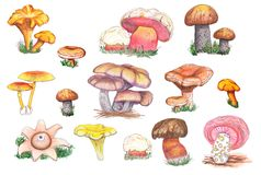 Originele eetbare en paddestoelpaddestoelen vector illustratie