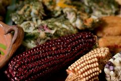 Originele prehispanic voedselingrediënten stock fotografie