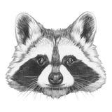 Originele tekening van Wasbeer vector illustratie