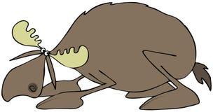 Orignaux de acroupissement de taureau Scared illustration stock
