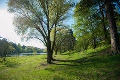 Orilla acogedora del lago en la primavera Imagen de archivo libre de regalías