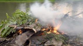 Orilla ardiente de las hojas y de las ramas del fuego en el campo almacen de metraje de vídeo