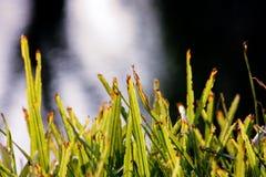 Orilla creciente de la planta; hojas verdes; planta y río imagen de archivo